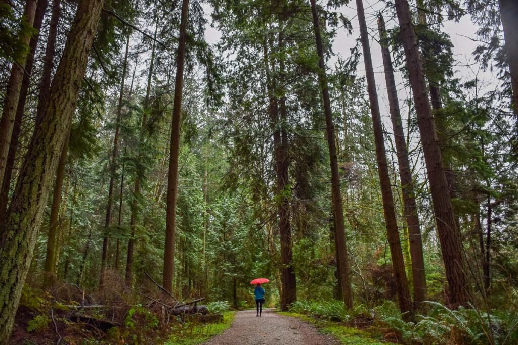 Wandering Stanley Park while its raining in Vancouver