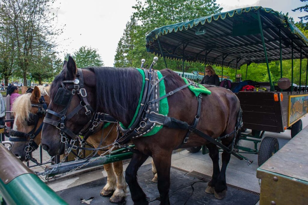 Horse drawn tour in Stanley Park