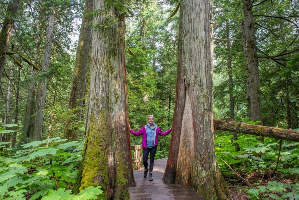 Hemlock Grove Boardwalk in Glacier National Park