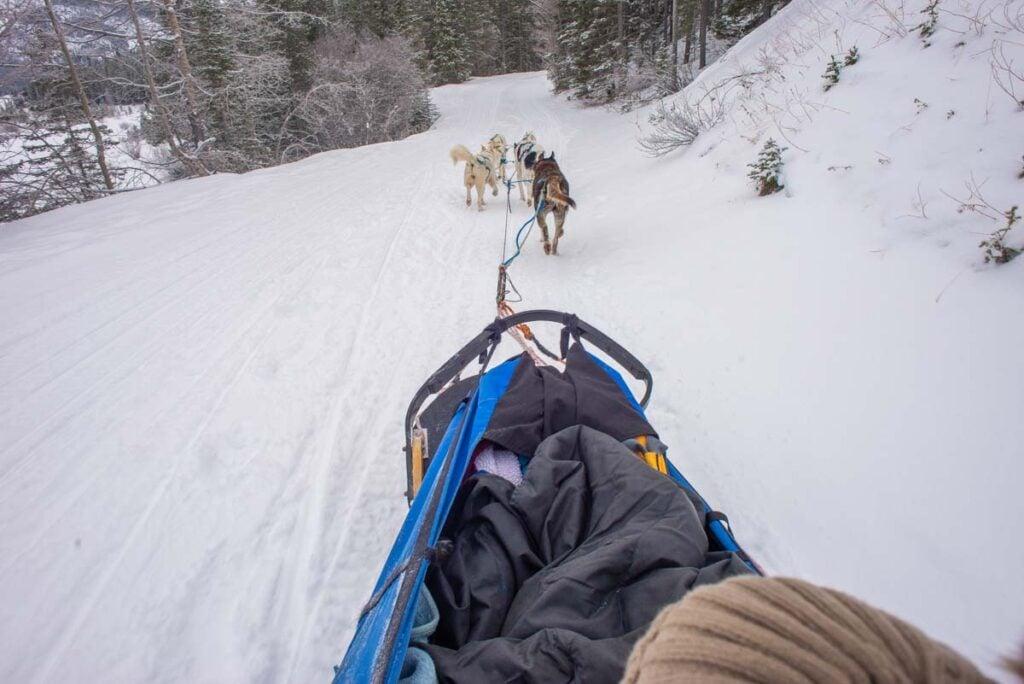 Dog sledding in Revelstoke, BC
