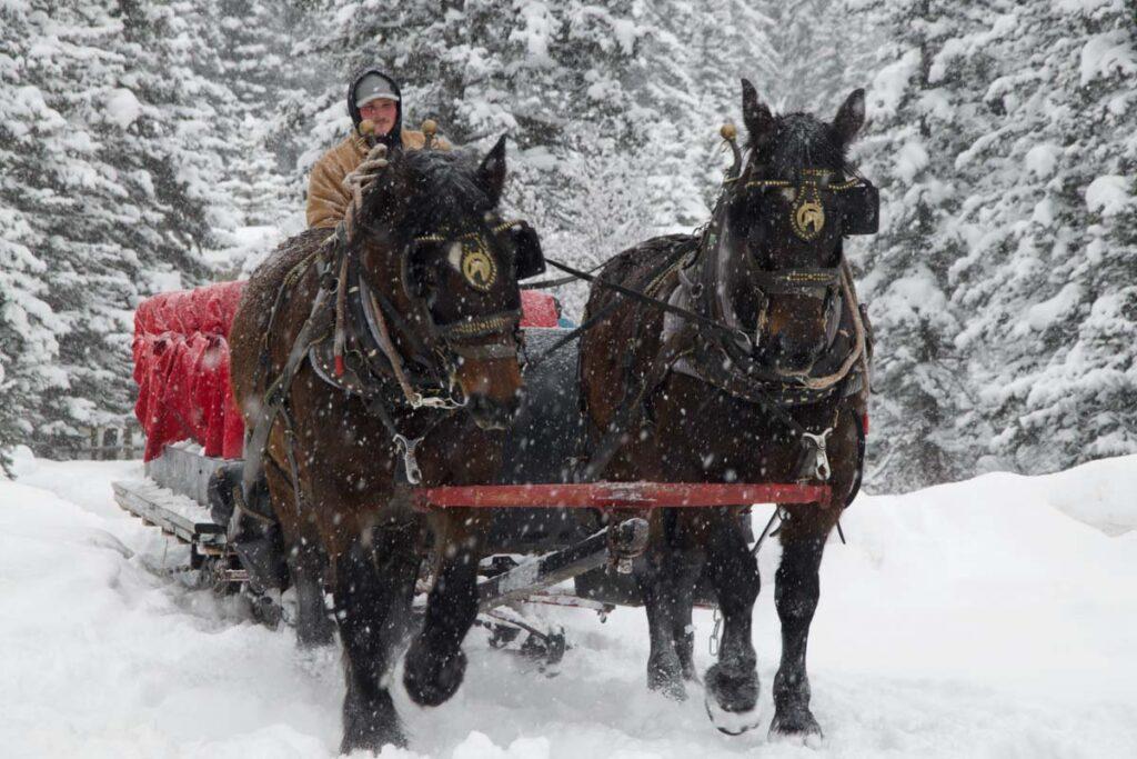 Horse-drawn sleigh, Banff